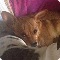 Adopt A Pet :: Lani - Livermore, CA