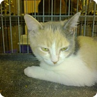 Adopt A Pet :: Cheeky - Hamilton, ON