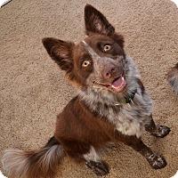 Adopt A Pet :: Relic - Garland, TX