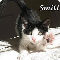 Adopt A Pet :: Smitty - Ocean City, NJ