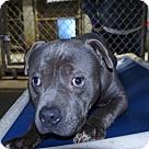 Adopt A Pet :: Webster - Henderson, NC