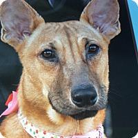 Adopt A Pet :: BONNIE VON BERLIN - Los Angeles, CA