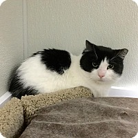 Adopt A Pet :: Achilles - Webster, MA