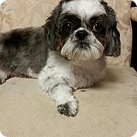 Adopt A Pet :: Persey - Urbana, OH