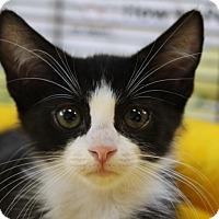 Adopt A Pet :: Reef - Sarasota, FL