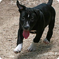 Adopt A Pet :: Marco - Rochester, NY