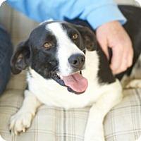 Adopt A Pet :: Gracie Mae - Marietta, GA