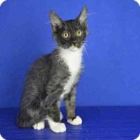 Adopt A Pet :: A024117 - Norman, OK