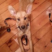 Adopt A Pet :: Sara - Woodstock, ON
