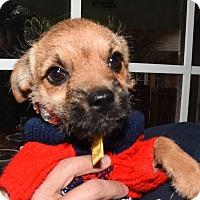 Adopt A Pet :: Muffin - Tijeras, NM