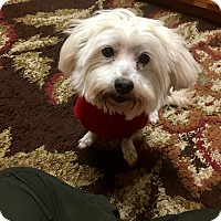 Adopt A Pet :: Addie Needs a Foster or Adopt - Pearland, TX