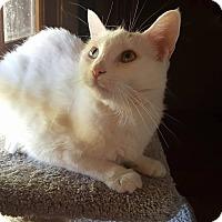 Adopt A Pet :: Dottie McVee - Phoenix, AZ