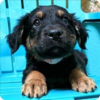 Adopt A Pet :: Thea - Riverside, CA