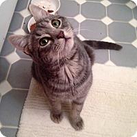 Adopt A Pet :: Simmi - River Edge, NJ