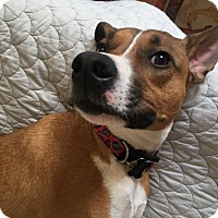 Adopt A Pet :: Aspen - Staunton, VA