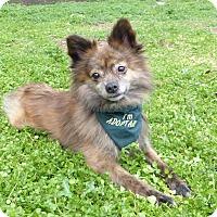 Adopt A Pet :: Tony - Mocksville, NC