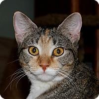 Adopt A Pet :: Hazel (and Pipkin) - Fairfax, VA