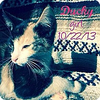 Adopt A Pet :: Ducky - Silver Lake, WI