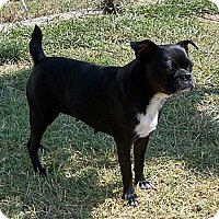 Adopt A Pet :: Ruby - San Angelo, TX