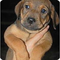 Adopt A Pet :: Sarah - Douglasville, GA