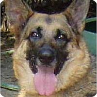 Adopt A Pet :: Nikki - Pike Road, AL
