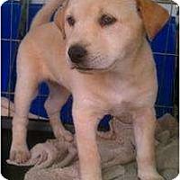 Adopt A Pet :: Khepri - Justin, TX