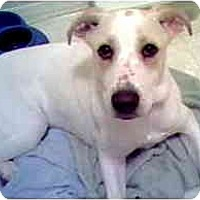 Adopt A Pet :: Trish - Scottsdale, AZ
