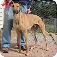 Adopt A Pet :: Comic - Oak Ridge, NC