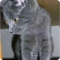 Adopt A Pet :: Sissy - Davis, CA