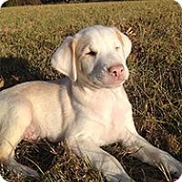 Adopt A Pet :: Wallace - Philadelphia, PA