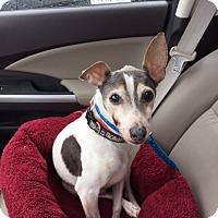 Adopt A Pet :: Vinnie - Richmond, VA