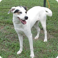 Adopt A Pet :: Shelby - Elmwood Park, NJ
