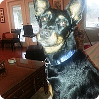 Adopt A Pet :: Torrie - Homewood, AL
