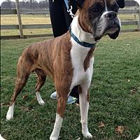 Adopt A Pet :: Bones - Elyria, OH