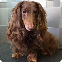 Adopt A Pet :: Oscar Meyer - McKinney, TX