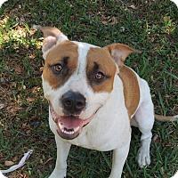 Adopt A Pet :: Sawyer - Grand Island, FL
