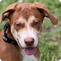 Adopt A Pet :: Sara - Broken Arrow, OK