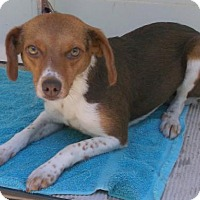 Adopt A Pet :: Posey - Birch Tree, MO