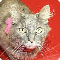 Adopt A Pet :: Loretta - Jackson, MI