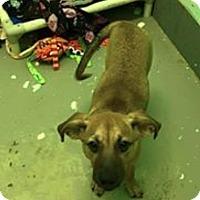 Adopt A Pet :: Aly Raisman - Jersey City, NJ
