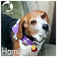 Adopt A Pet :: Hamilton - Pittsburgh, PA
