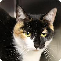 Adopt A Pet :: Grittle - Sarasota, FL