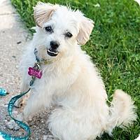 Adopt A Pet :: Hopscotch - Bristol, CT