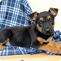Adopt A Pet :: Wednesday - Los Angeles, CA