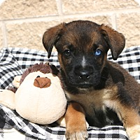 Adopt A Pet :: Tahoe - Norwalk, CT