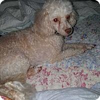 Adopt A Pet :: Felix - Sheridan, OR