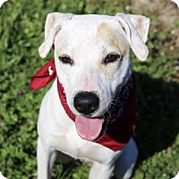 Adopt A Pet :: Lady - Lakeland, FL