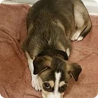Adopt A Pet :: Kodak $250 - Seneca, SC
