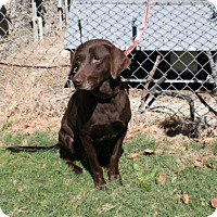 Adopt A Pet :: Maryann - Willingboro, NJ