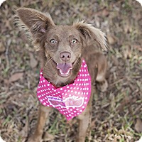 Adopt A Pet :: Hannah - Kingwood, TX